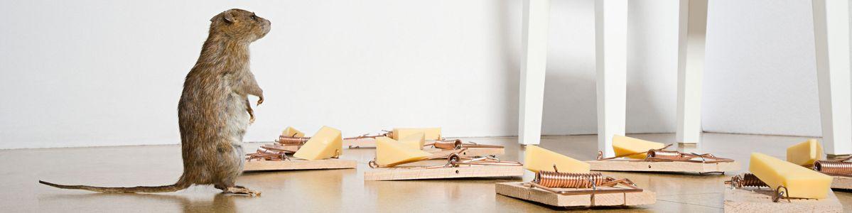 leistungen d ttling sch dlingsbek mpfung in bad liebenstein. Black Bedroom Furniture Sets. Home Design Ideas
